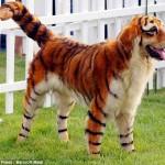 Модные собачки и их владельцы