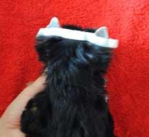 щенок йорка фото, клеим уши