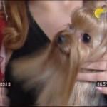 Видео сюжет «Собачья свадьба»