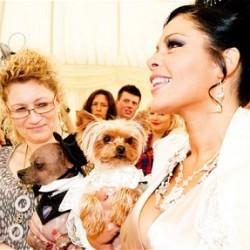 Самый экстравагантный владелец собаки в Британии потратил ? 20,000 на организацию свадебной церемонии для своего Йорка