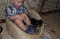 Щенок Йоркширского терьера в доме где есть маленькие дети