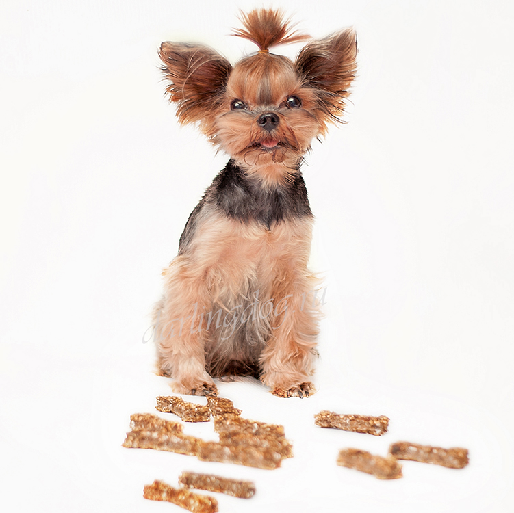 Лакомство для собак, вкусняшка своими руками